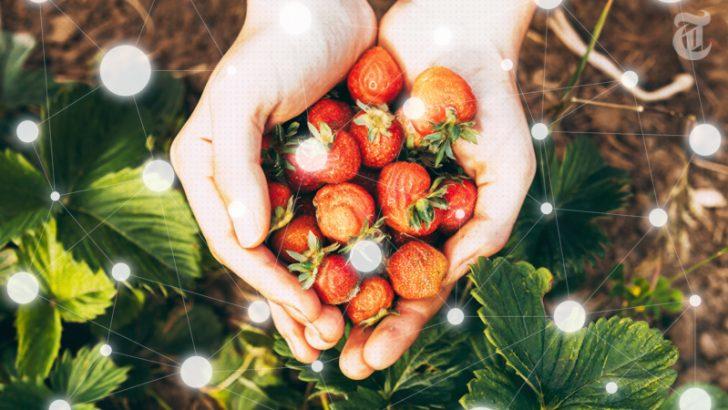 ブロックチェーンが「農業」の未来を変革 ー トレーサビリティで食品管理をスマートに