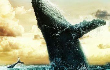 ビットコインを大量保有する「クジラ」詳細情報や影響力が明らかに ー Chainalysis