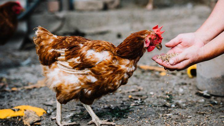 IBMのブロックチェーン技術で「鶏肉ブランド」の安全保証|フランス小売大手カルフール