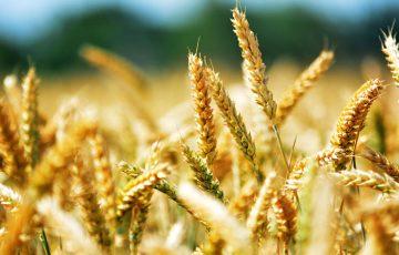 「黒海小麦取引」の情報管理にブロックチェーン導入テスト|スイス農作物輸出会社
