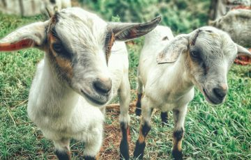 仮想通貨を送金して動物に「餌やり」オンラインで飼育できる環境を構築