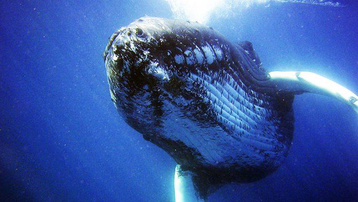 ビットコインに大規模な価格変動の前触れか|冬眠状態の「クジラ」に資産移動の動き