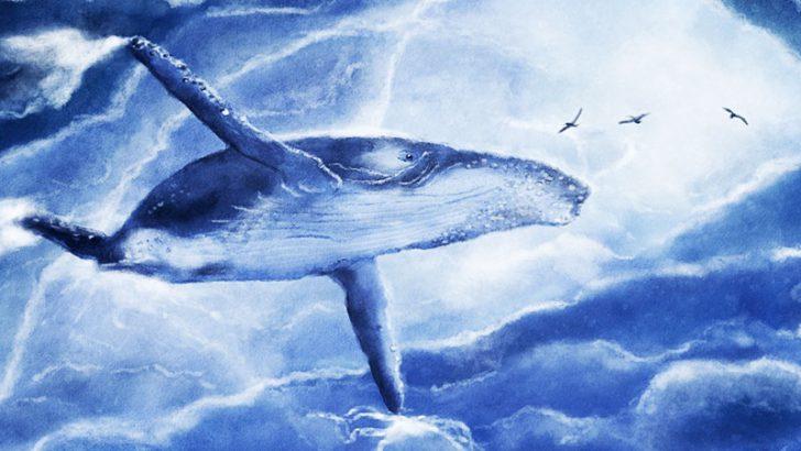 ビットコインクジラは順調に資産を増やす|2ヶ月間の下落相場で「15万BTC」買い貯め
