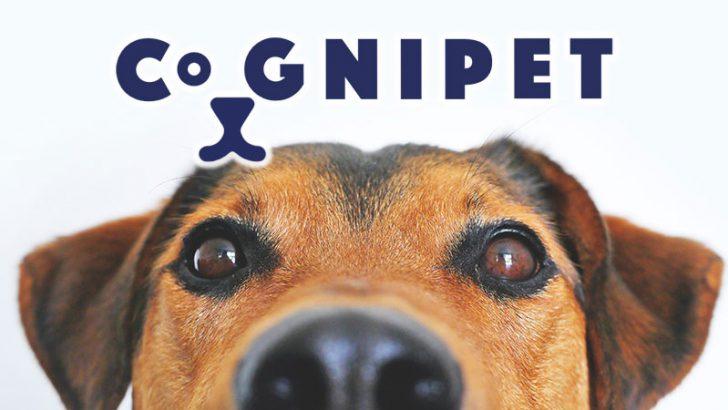 ブロックチェーンで「ペット業界」に新たなコミュニティを|スイス企業がアプリ開発