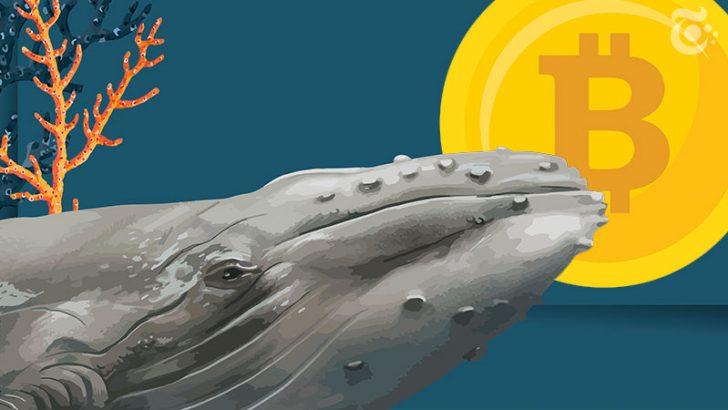 ビットコインクジラ「数億円規模の出金報告」相次ぐ|中央銀行への信頼低下も影響か