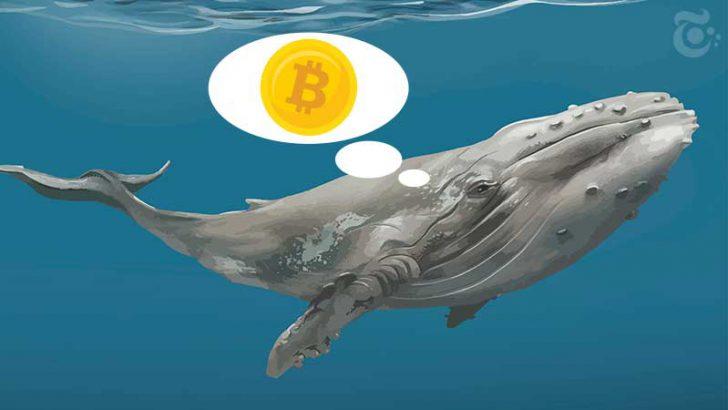 保有資産「約7,000BTC」のビットコインクジラが語る、暗号市場と今後の展望