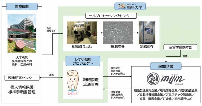 しずい細胞プロジェクト概要図(画像:テックビューロプレスリリースから)
