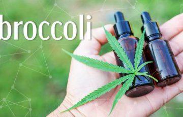 大麻業界の「調査コミュニティ構築」にブロックチェーン活用|Broccoli×Measure Protocol