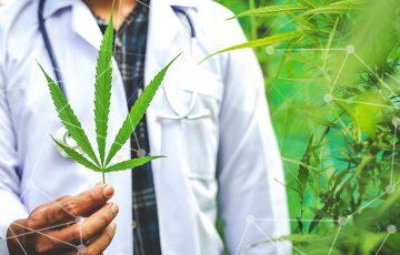 ブロックチェーン用いた「医療用大麻の情報追跡アプリ」今夏公開へ:ウルグアイ企業