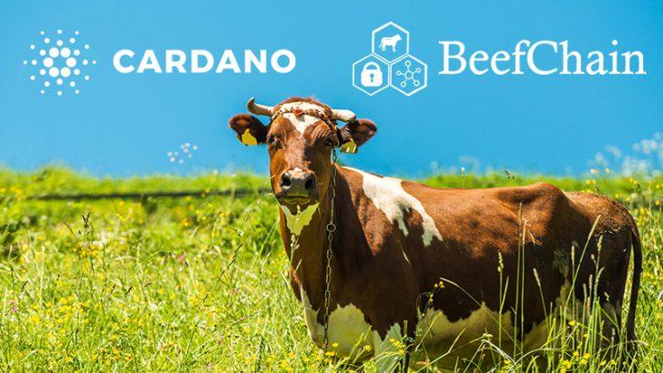 カルダノ開発企業:食品追跡会社「BeefChain」と提携|サプライチェーン管理などで協力
